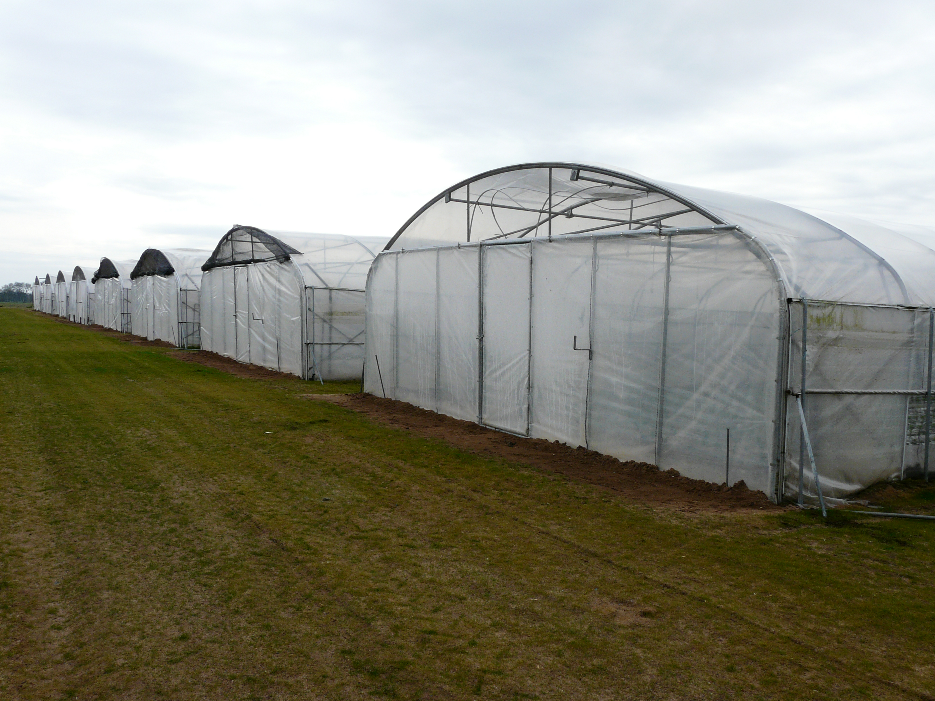 12550 m² of greenhouses !